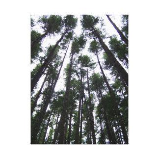 Entouré par des arbres toile tendue sur châssis
