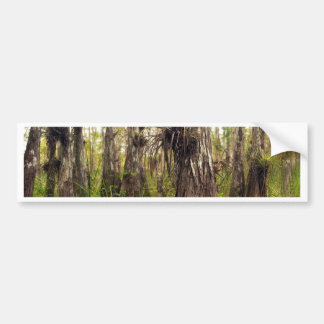 Epiphyte Bromeliad in Florida Forest Bumper Sticker