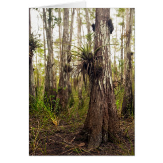 Epiphyte Bromeliad in Florida Forest Card