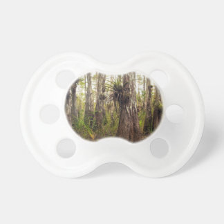 Epiphyte Bromeliad in Florida Forest Pacifiers