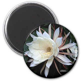 Epiphyte Cactus Flower 2 Inch Round Magnet