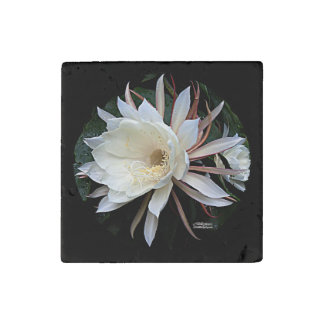 Epiphyte Cactus Flower Stone Magnets