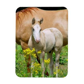 Equine Art Premium Magnet