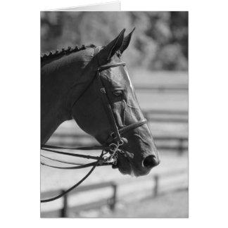 Equitation Horse Card