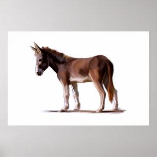 Equus asinus poster