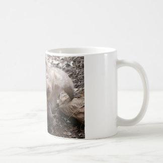 Éraflure de wombat tasses