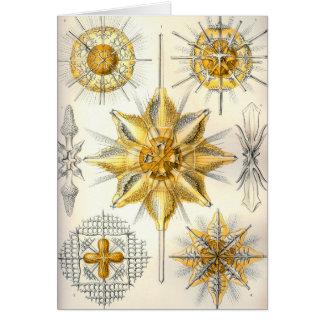 Ernst Haeckel  Acanthometra Card