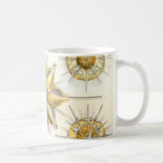 Ernst Haeckel  Acanthometra Coffee Mug