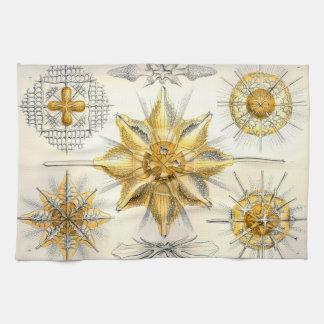 Ernst Haeckel  Acanthometra Kitchen Towel