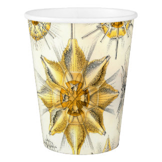 Ernst Haeckel  Acanthometra Paper Cup