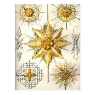 Ernst Haeckel  Acanthometra Postcard