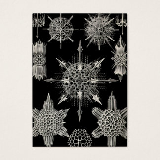Ernst Haeckel | Acanthophracta Business Card