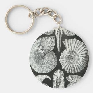 Ernst Haeckel - Ammonitida Basic Round Button Keychain