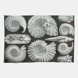 Ernst Haeckel Ammonitida fossils Kitchen Towel