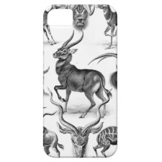 Ernst Haeckel - Antilopina iPhone 5 Cases