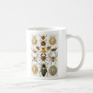 Ernst Haeckel - Arachnida Coffee Mug