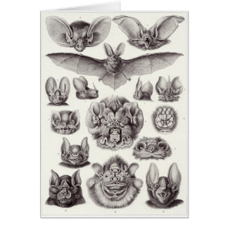 Ernst Haeckel Art Card: Chiroptera Card