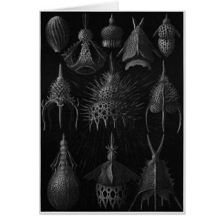 Ernst Haeckel Art Card: Cyrtoidea Card