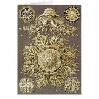 Ernst Haeckel Art Card: Discomedusae Card