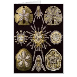 Ernst Haeckel Art Card: Echinidea Card