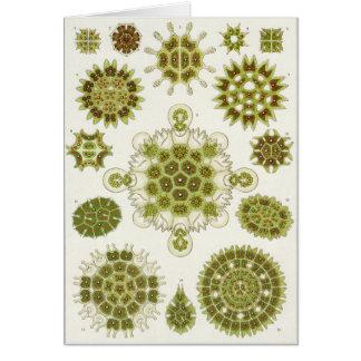 Ernst Haeckel Art Card: Melethallia Card