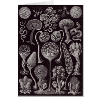 Ernst Haeckel Art Card: Mycetozoa Card