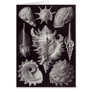 Ernst Haeckel Art Card: Prosobranchia Card
