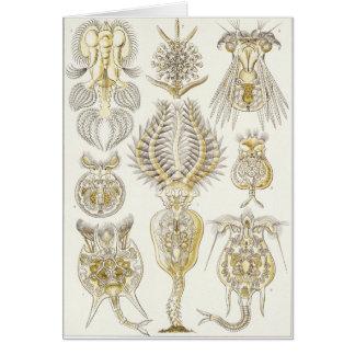 Ernst Haeckel Art Card: Rotatoria Card