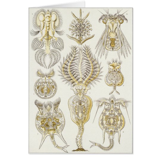 Ernst Haeckel Art Card: Rotatoria Card