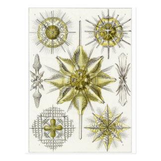 Ernst Haeckel Art Postcard: Acanthometra Postcard