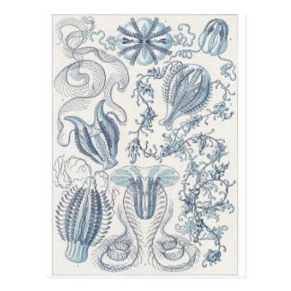 Ernst Haeckel Art Postcard: Ctenophorae Postcard