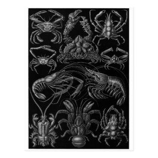 Ernst Haeckel Art Postcard: Decapoda Postcard