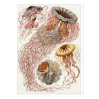 Ernst Haeckel Art Postcard: Discomedusae Postcard