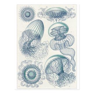 Ernst Haeckel Art Postcard: Leptomedusae Postcard