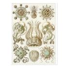 Ernst Haeckel Art Postcard: Narcomedusae Postcard