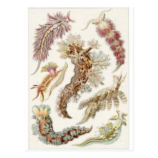 Ernst Haeckel Art Postcard: Nudibranchia Postcard