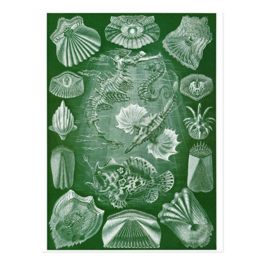 Ernst Haeckel Art Postcard: Teleostei Postcard