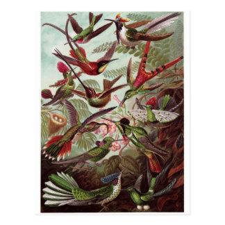 Ernst Haeckel Art Postcard: Trochilidae Postcard