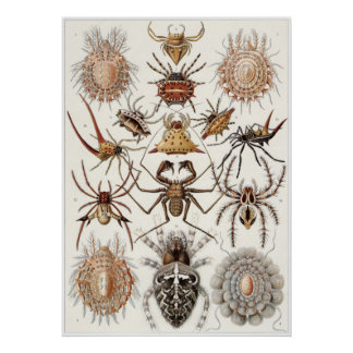 Ernst Haeckel Art Print: Arachnida Poster