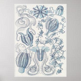 Ernst Haeckel Art Print: Ctenophorae Poster