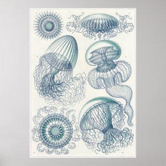 Ernst Haeckel Art Print: Leptomedusae Poster