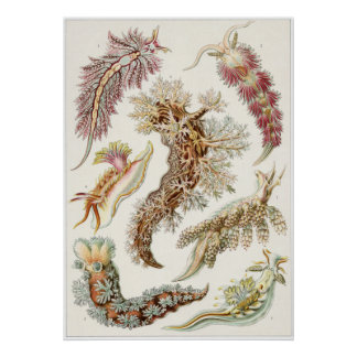 Ernst Haeckel Art Print: Nudibranchia Poster