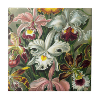 Ernst Haeckel Art Print:Orchidae Oncidiums, tulips Tile