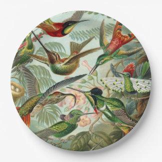 Ernst Haeckel Art Print: Trochilidae Paper Plate