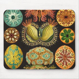 Ernst Haeckel - Ascidiae Detail2 Mouse Pad