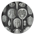 Ernst Haeckel - Aspidonia Plate