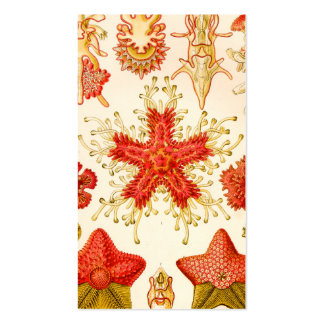 Ernst Haeckel Asteridea Business Card Templates