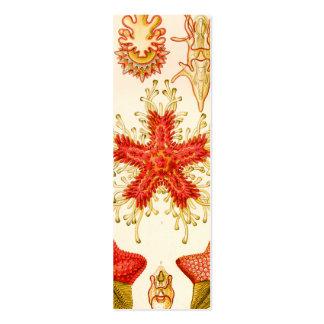 Ernst Haeckel Asteridea Business Cards