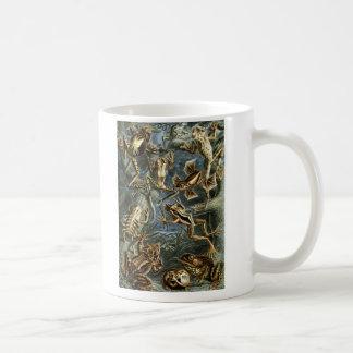 Ernst Haeckel - Batrachia Coffee Mug