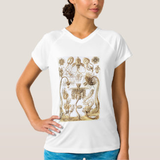 Ernst Haeckel Biology Drawings T-Shirt